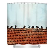 Birds On A Rooftop Shower Curtain