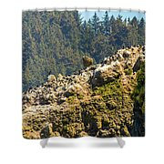 Birds On The Rocks Shower Curtain