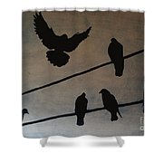 Birds On Wire Shower Curtain