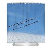 Birds On Wires Shower Curtain