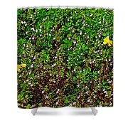 Birdsfoot Trefoil Surrounded By Tiny Bright Eyes In Campground In Saginaw-minnesota Shower Curtain