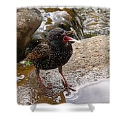 Birdsong Shower Curtain