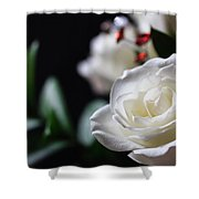 Birthday Roses Shower Curtain