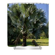 Bismarck Palm Shower Curtain
