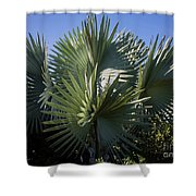 Bismarckia Shower Curtain