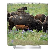 Bison And Lupine Shower Curtain