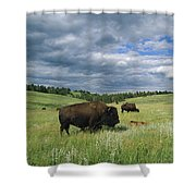 Bison And Their Calves Graze In Custer Shower Curtain