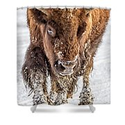 Bison Approaching  8163 Shower Curtain