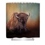 Bison At Rest Shower Curtain