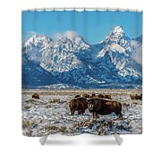 Bison At The Tetons Shower Curtain