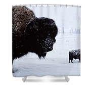 Bison Bison Bison In The Snow Shower Curtain