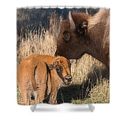 Bison Calf And Its Mother Shower Curtain