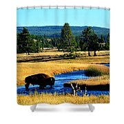 Bison Shower Curtain by Carrie Putz