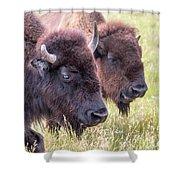 Bison Closeup View Shower Curtain