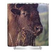 Bison Contemplating Shower Curtain