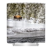 Bison Country  8101 Shower Curtain