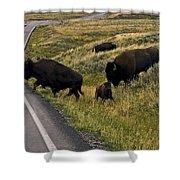 Bison Disrupting Traffic Shower Curtain