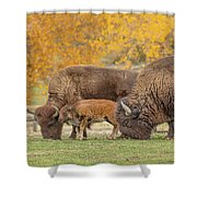 Bison Family Nation Shower Curtain