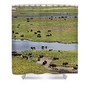 Bison Herd And Yellowstone River Shower Curtain