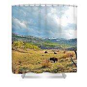 Bison Herd Shower Curtain