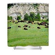 Bison Herd II Shower Curtain