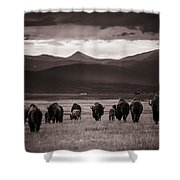 Bison Herd Into The Sunset - Bw Shower Curtain