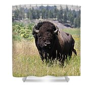Bison In Grass Shower Curtain