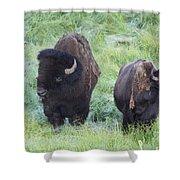 Bison In Love Iv Shower Curtain