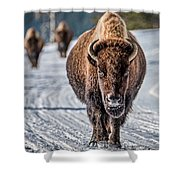 Bison In The Road - Yellowstone Shower Curtain
