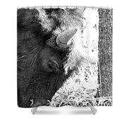 Bison Portrait Monochrome Shower Curtain