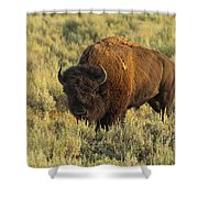 Bison Shower Curtain by Sebastian Musial