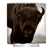 Bison Showdown Shower Curtain