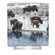 Bison Snow Reflecton Shower Curtain