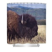 Bison Strength Shower Curtain