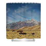 Bison The National Mammal Shower Curtain