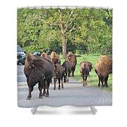 Bison Traffic Jam Shower Curtain