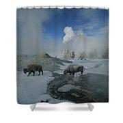 Bison Walking In Front Of Lion Geyser Shower Curtain