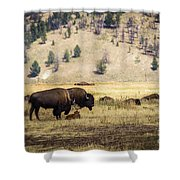 Bison With Calf Shower Curtain