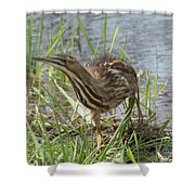 Bittern Shower Curtain