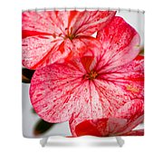 Bizzy Lizzy Shower Curtain