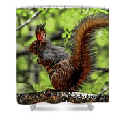 Black Abert's Squirrel - Half And Half Shower Curtain