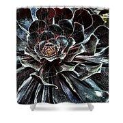 Black Aeonium Shower Curtain