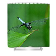 Black And Blue Dragonfly Shower Curtain