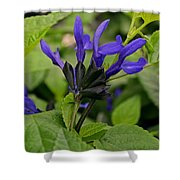 Black And Blue Salvia Shower Curtain