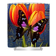 Black And Pink Butterfly Shower Curtain