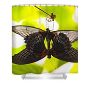 Black And Red Butterflies Shower Curtain