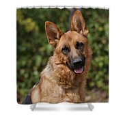 Black And Red German Shepherd Dog Shower Curtain