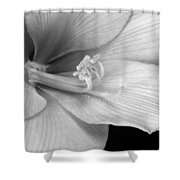Black And White Amaryllis Bloom Shower Curtain