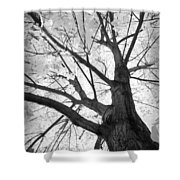 Black And White Autumn Tree  Shower Curtain
