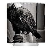 Black And White Bald Eagle Shower Curtain